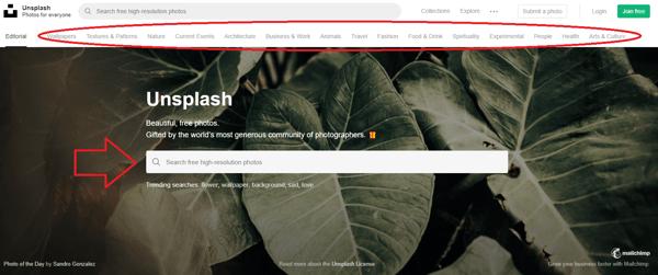 Unsplash Search Bar